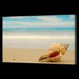 Conch Shell on Ocean