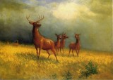 Deer in a Field