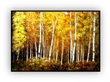 Canadian Landscapes 015G: 36x48inches