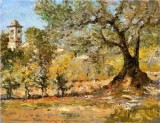 Olive Trees, Florence