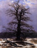 Oak Tree in Snow.jpg