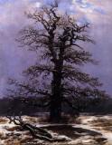 Oak Tree in Snow.jpg