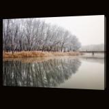 Wintery Trees