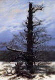 The Oaktree In The Snow.jpg